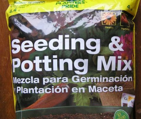 planting seeds starter